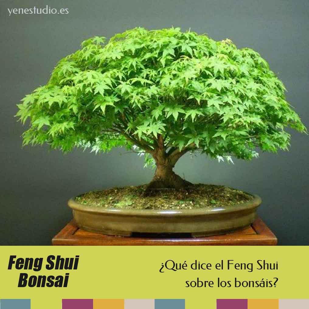 Bonsáis y el Feng Shui