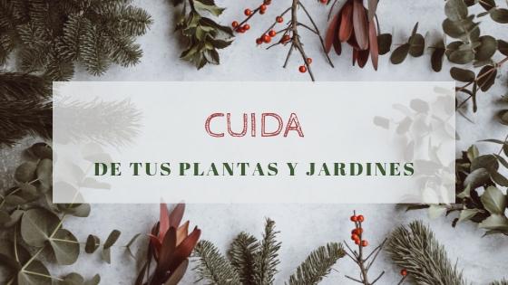 Cuida de tus plantas y espacios verdes