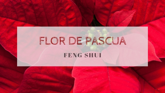 Feng Shui y la Navidad: Flor de Pascua